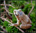 Title: Baby frog