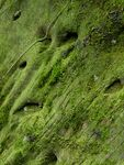 Title: Moss-Covered Rock