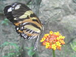Title: butterfly beaultiful