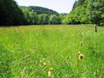 Title: Nature forest meadow