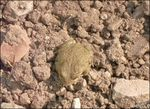 Title: Green Toad