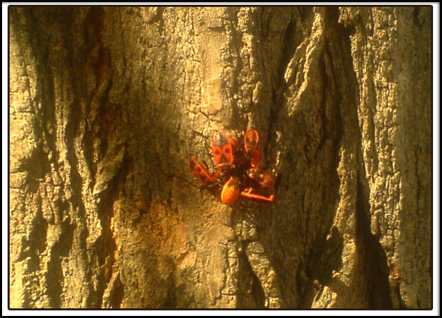Insects on a tree