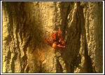 Title: Insects on a tree
