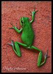 Title: Early morning frog