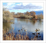 Title: Bird Watching on the Rio Grande