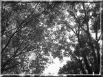 Title: Trees 2