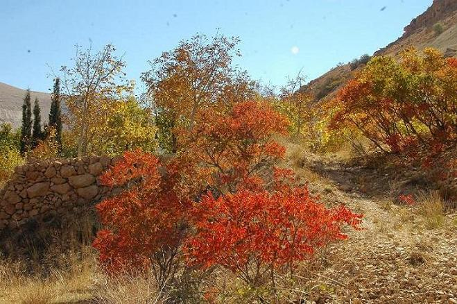 small red trees