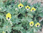 Title: yellow plant