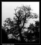 Title: Tree Of Mystery