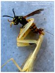 Title: Devoured Insect