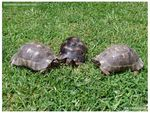 Title: Turtle Meeting