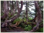 Title: Mountain Forest