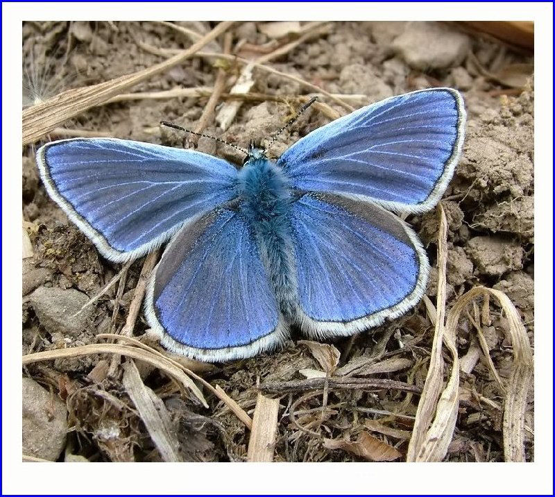 Favourite butterfly
