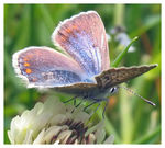 Title: butterfly composition