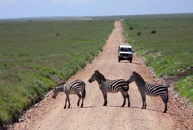 Zebra Crossing - Thanks for waiting!