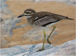 Title: Water Thick Knee