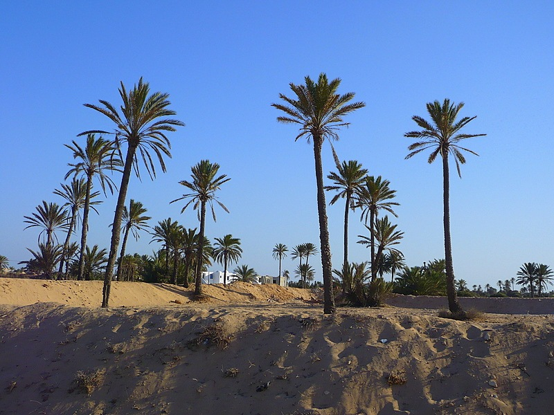 In the shadow of the palm?