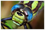Title: Close-up view of  head  and compound eye