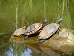 Title: turtle family