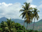 Title: Tall Palm Trees