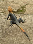 Title: West African Rainbow
