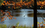 Title: Heron at Beebe Pond