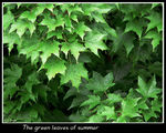 Title: The green leaves of summer
