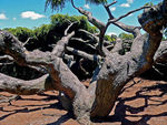 Title: tree of life