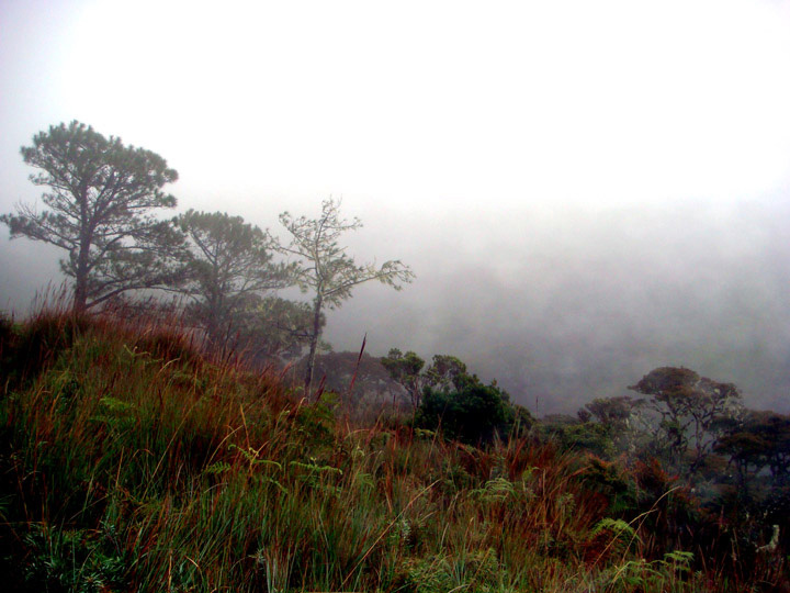 Mt pulag mossy forest