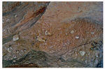 Title: shell fossils at 5000 asl