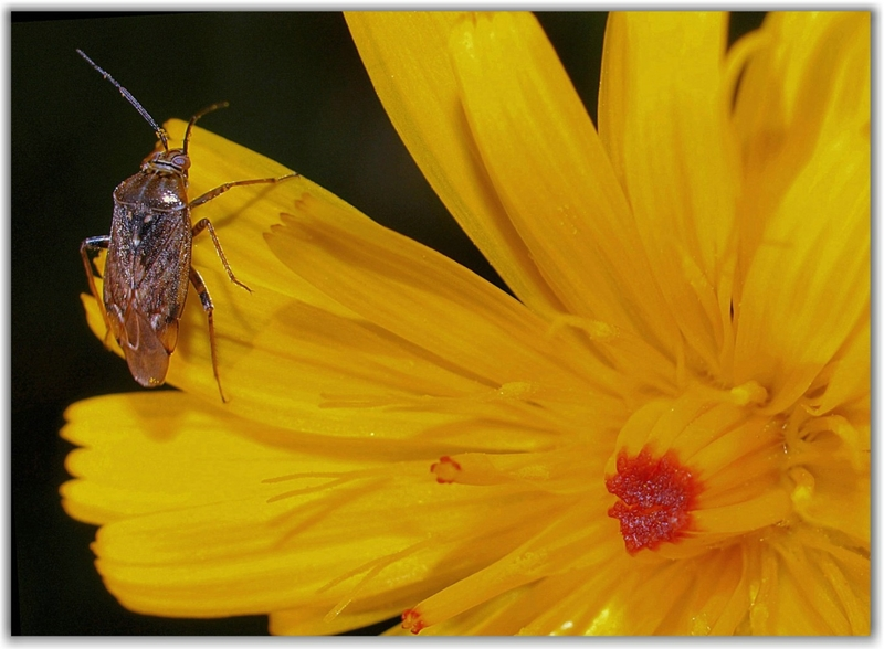 Flower and beetle