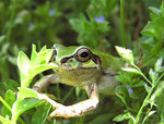 Title: a frog