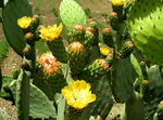 Title: flowers on the cactu