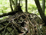 Title: roots