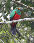 Title: Golden-headed QuetzalCanon 40 D