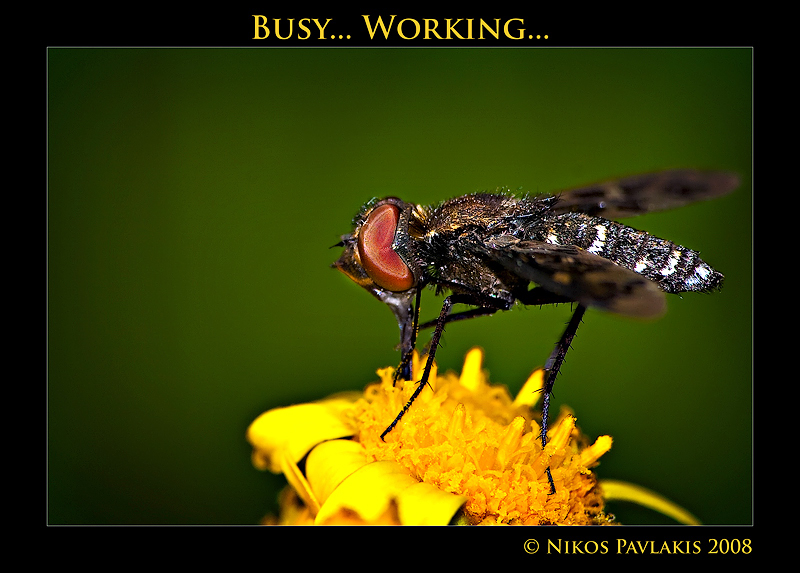 *** Busy...Working