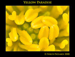 Title: Yellow Paradise
