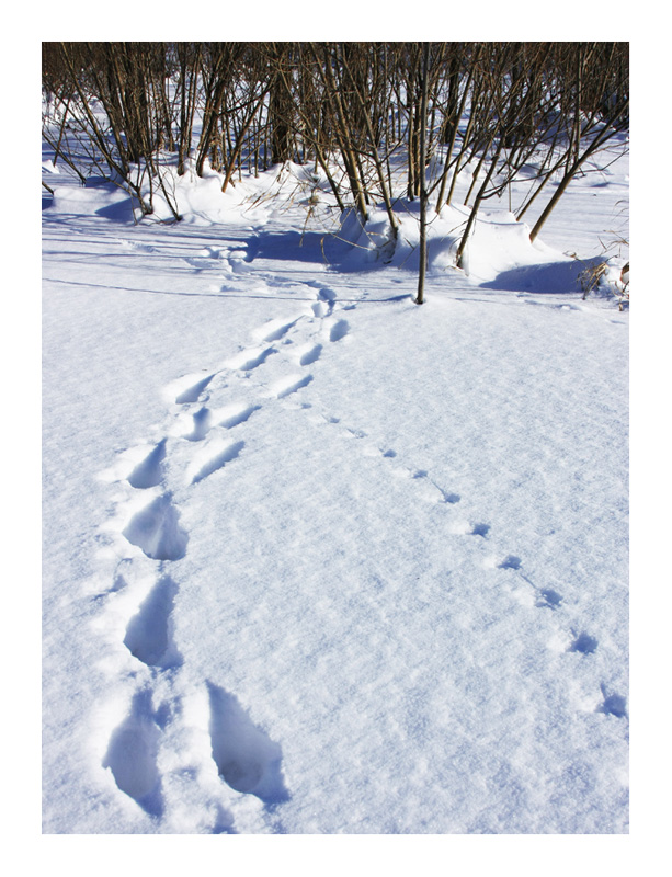 The Winter Forest Traces