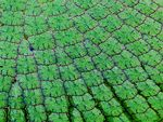 Title: Amazon Water Lily LeafCanon Powershot S1-IS