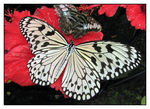 Title: Rice Paper Butterfly