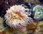 Title: Sea AnemonesCanon Powershot S1-IS