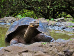 Title: Galapagos Giant TortoisesCanon Powershot SX230IS