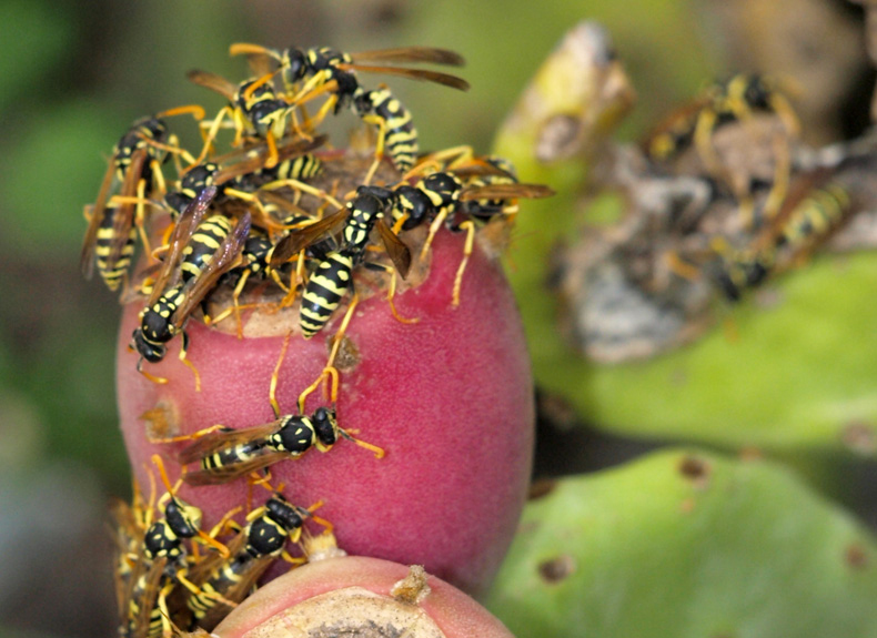 Hungry wasps !!