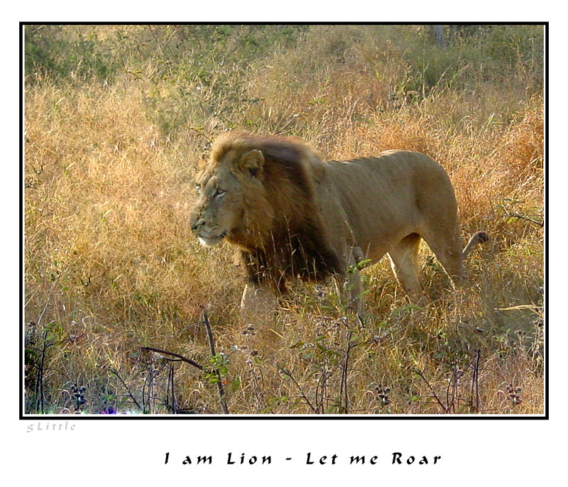 I am Lion - Let me Roar