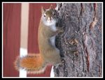 Title: Squirrel