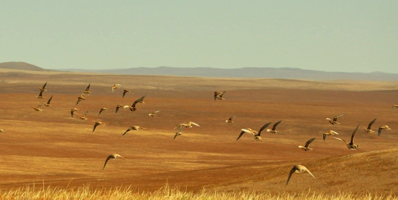 Migration in Mongolia