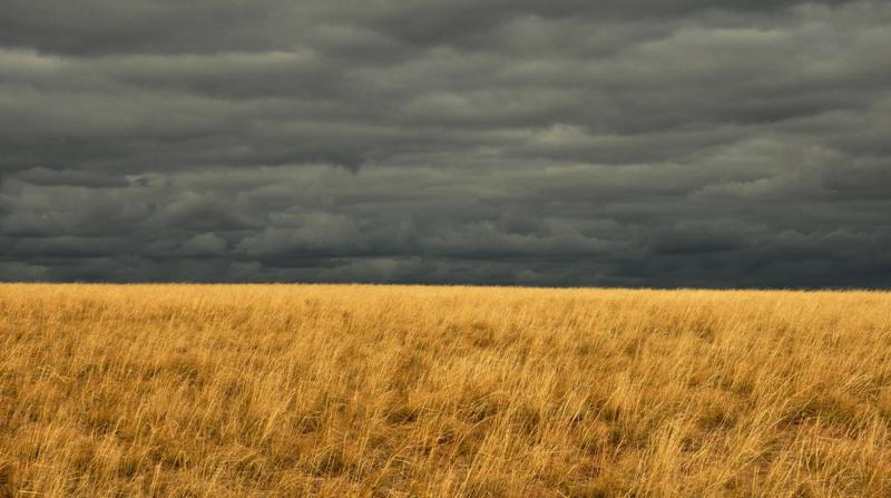 Contrasts of the Steppe
