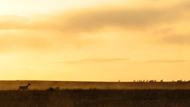 Steppe Sunset Gazelles
