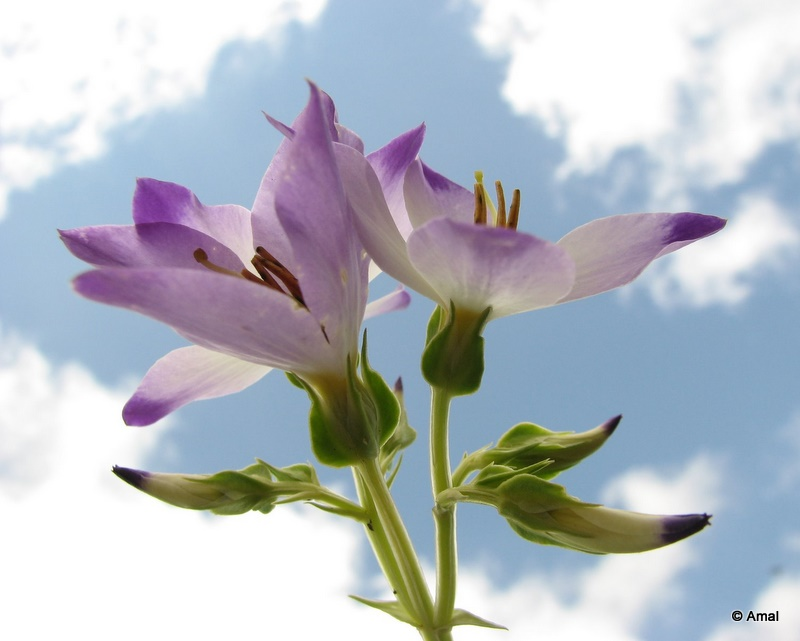 Flower on the sky background