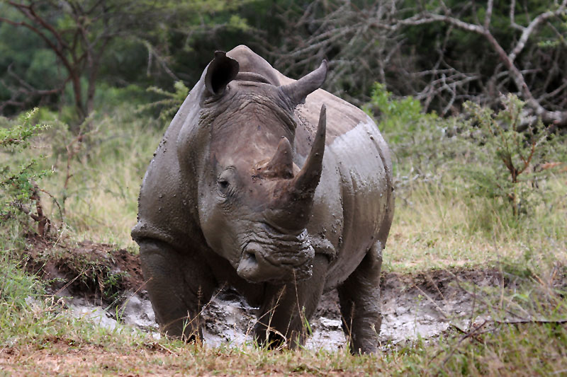 Rhino Africa Tours - South Africa Forum